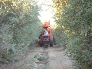 DWJ Farm Row with Tractor